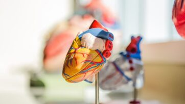 The cardiac pacemaker of the future could be powered by the heart itself, according to researchers at Shanghai Jiao Tong University. (jesse orrico/Unsplash)