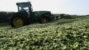 Congress Battles Over Biofuels As California Demand Squeezes Bakers