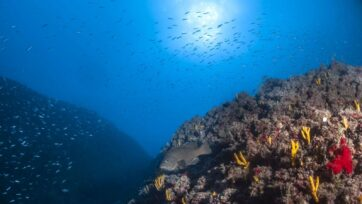 Entire marine protected areas are affected by overfishing and other human pressure on their borders, new research shows. (Courtesy of Tel Aviv University)