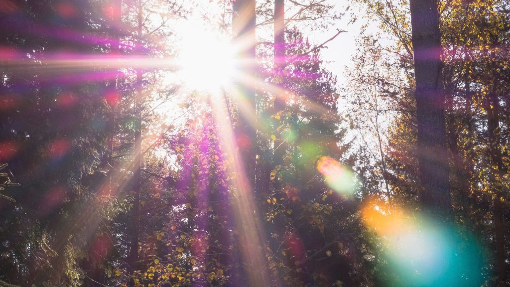 IOS 15 May Remove Lens Flare From Photos, To Upgrade Camera
