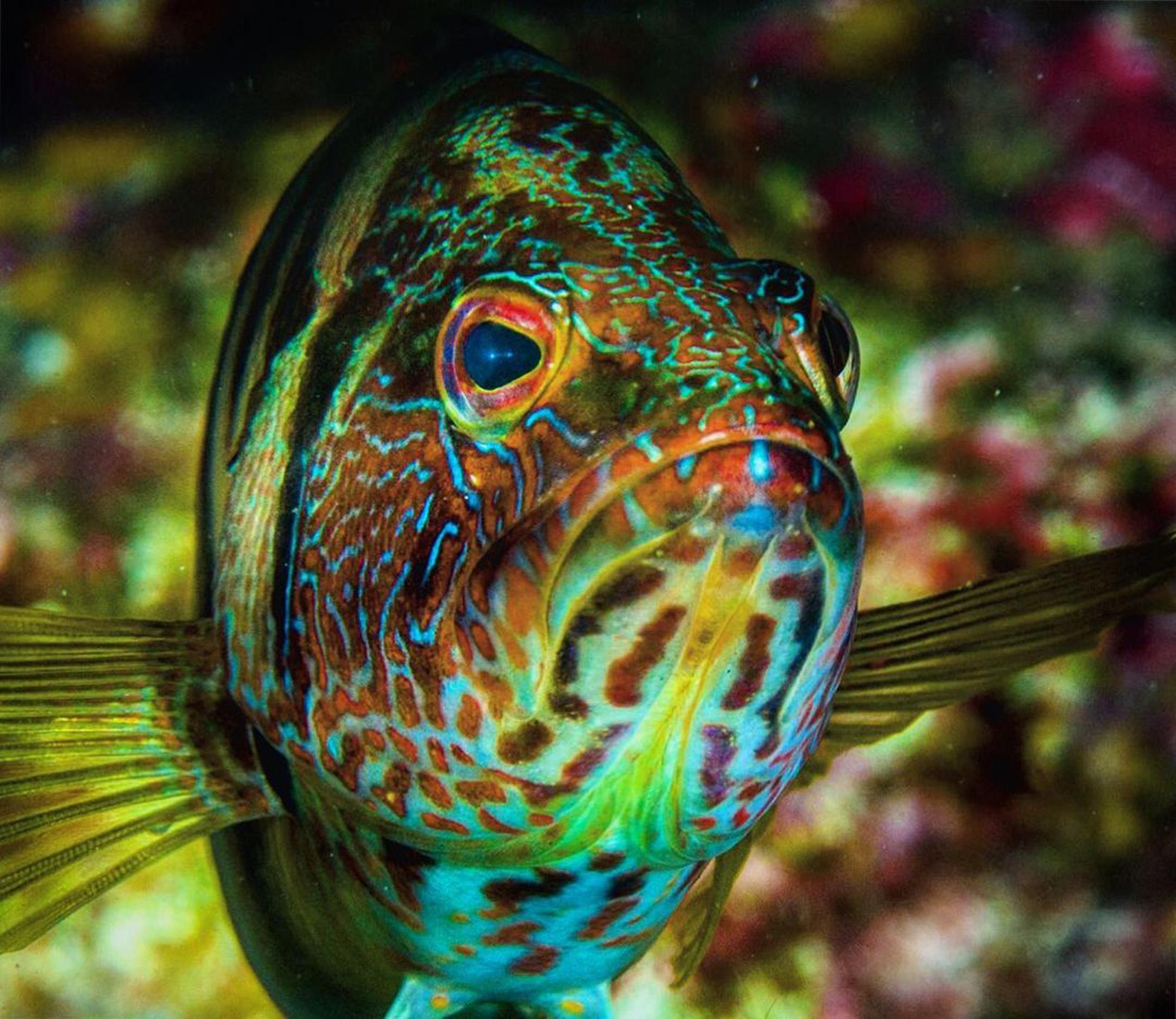 ¡Mírenlos mientras puedan! Tributo fotográfico de los hábitats oceánicos amenazados