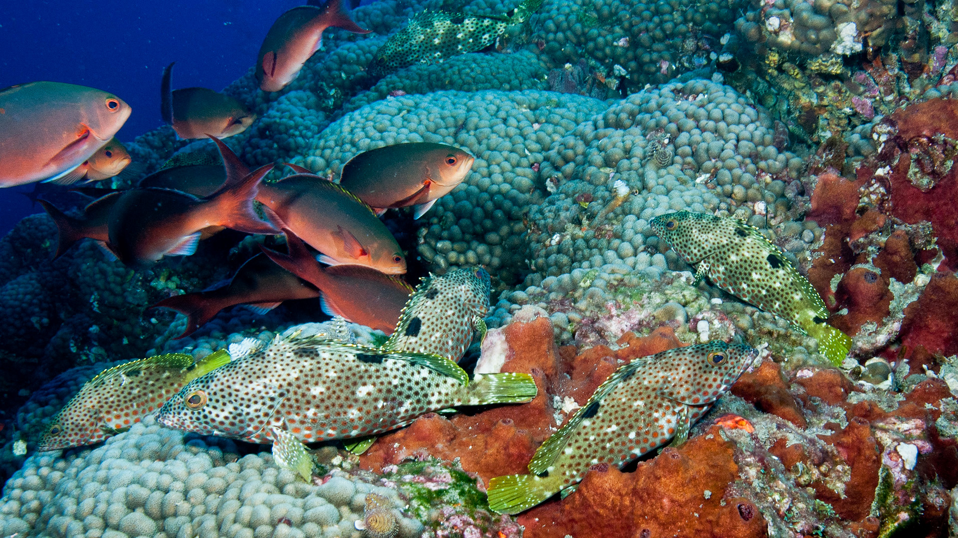 Study Suggests Venom Contributed To Formation Of New Fish, Insect Species