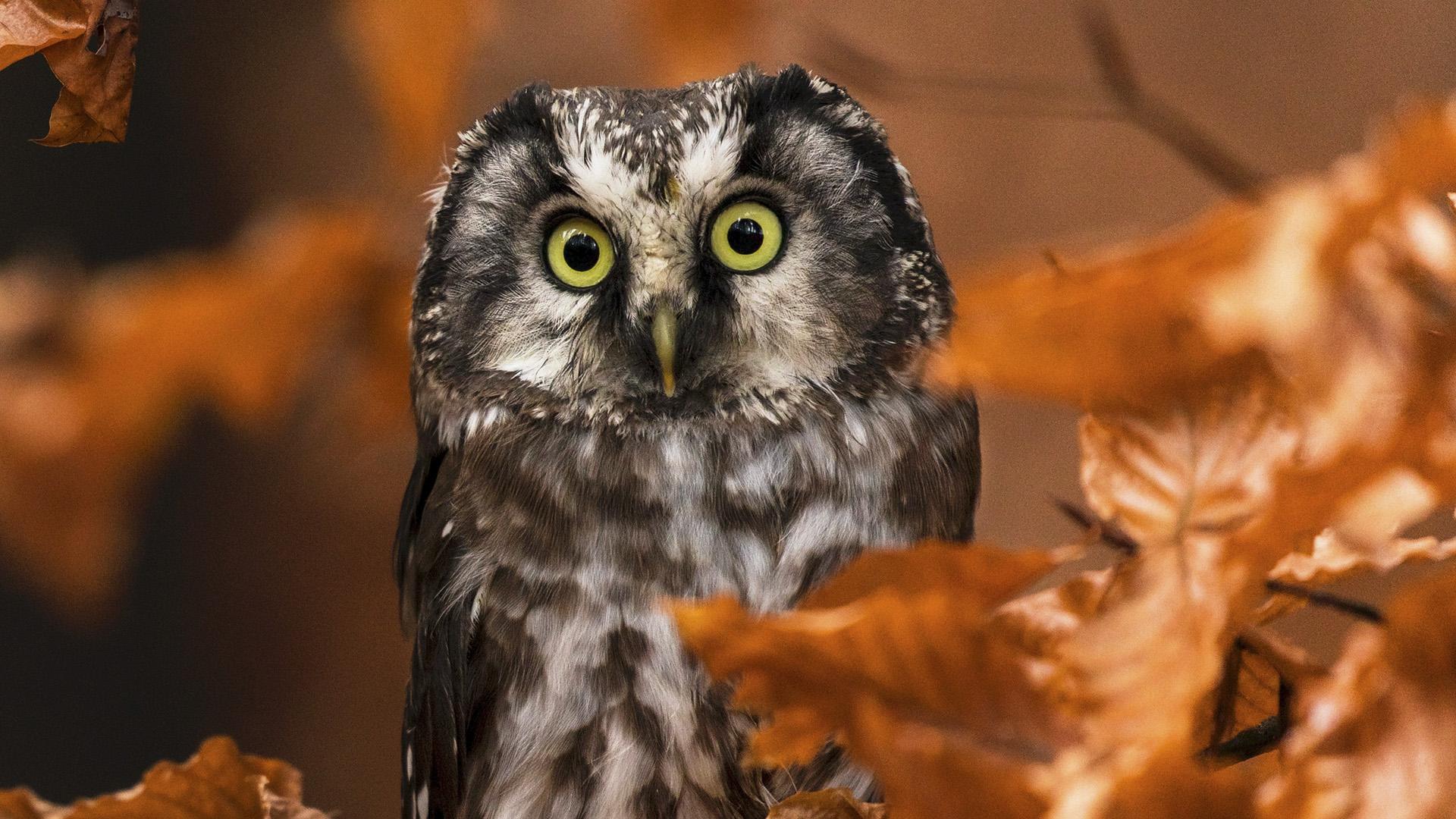 Eye Size Of Birds May Predict Sensitivity To Environmental Change: Study