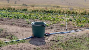 Vegetables irrigated with N-Drip's system in Eswatini (Swaziland). (Will Brown)