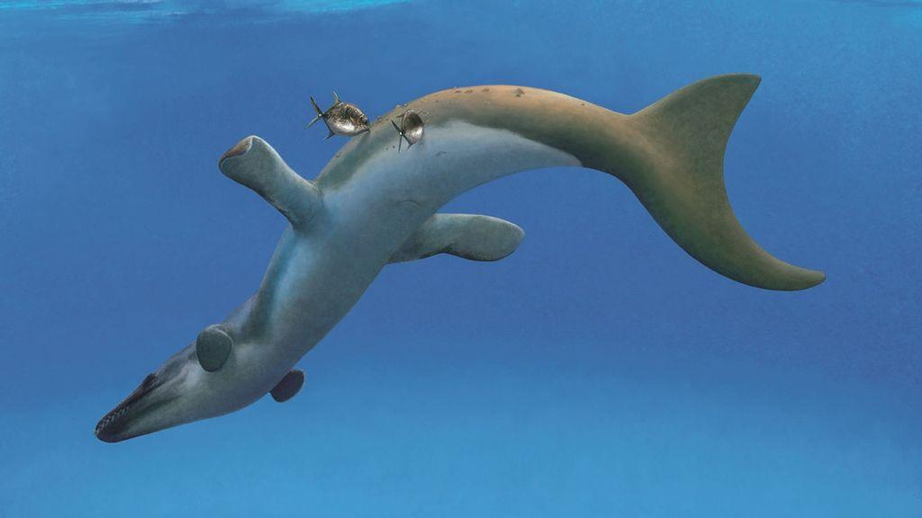 Smooth Croc-erator: Prehistoric Crocs Had Glossy Skin Like Modern Day Dolphins, Say Experts