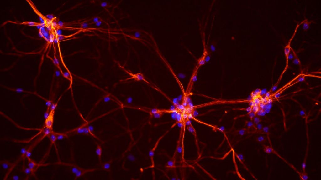 Nearly All Primary Touch-Sensitive Neurons Respond To Most Information Available: Study
