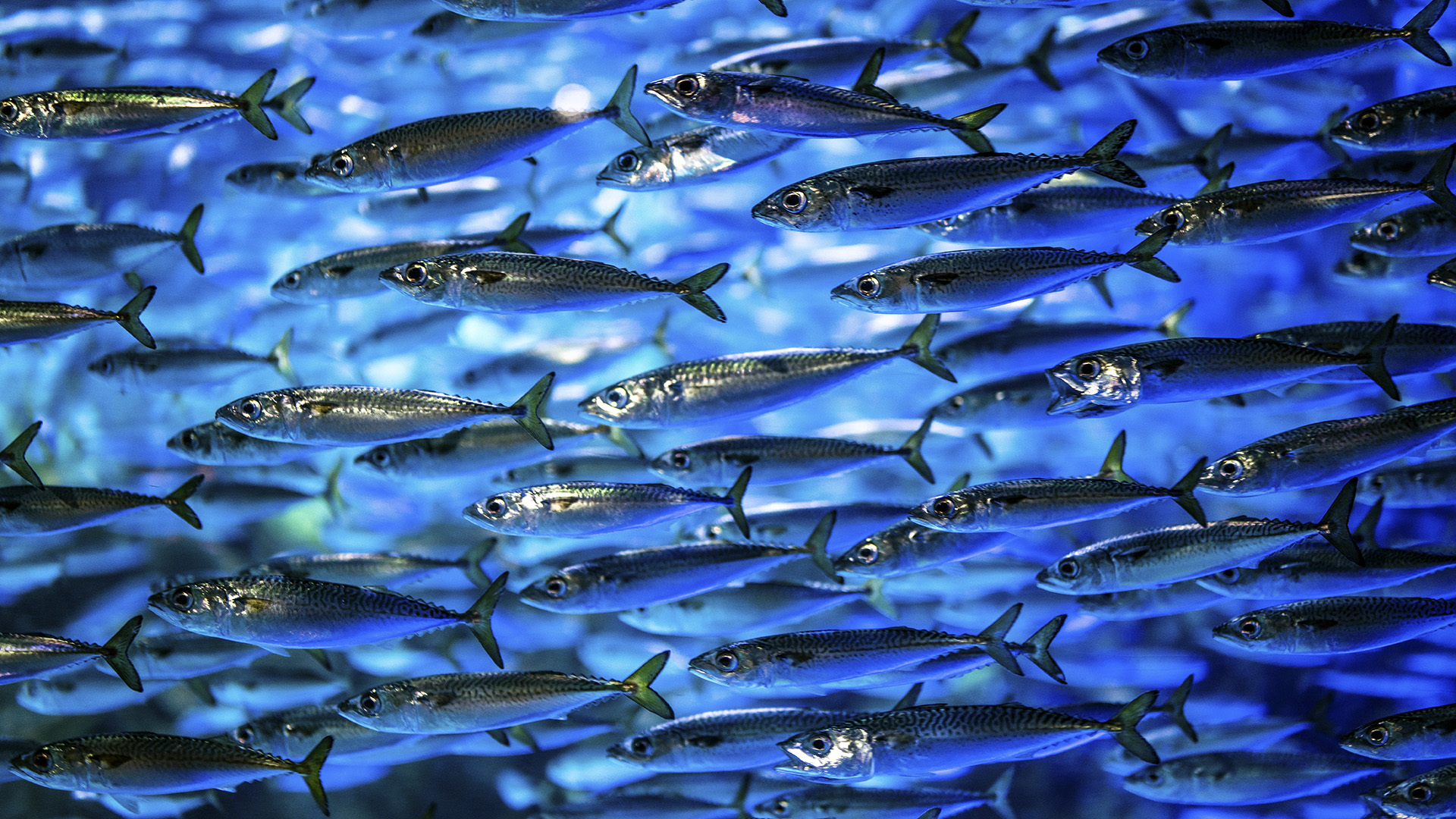 Climate Change Could Kill Off Fish Species: Study