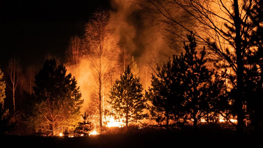 Wildfire Horror: 25 Soldiers Burned To Death Fighting Mountain Inferno