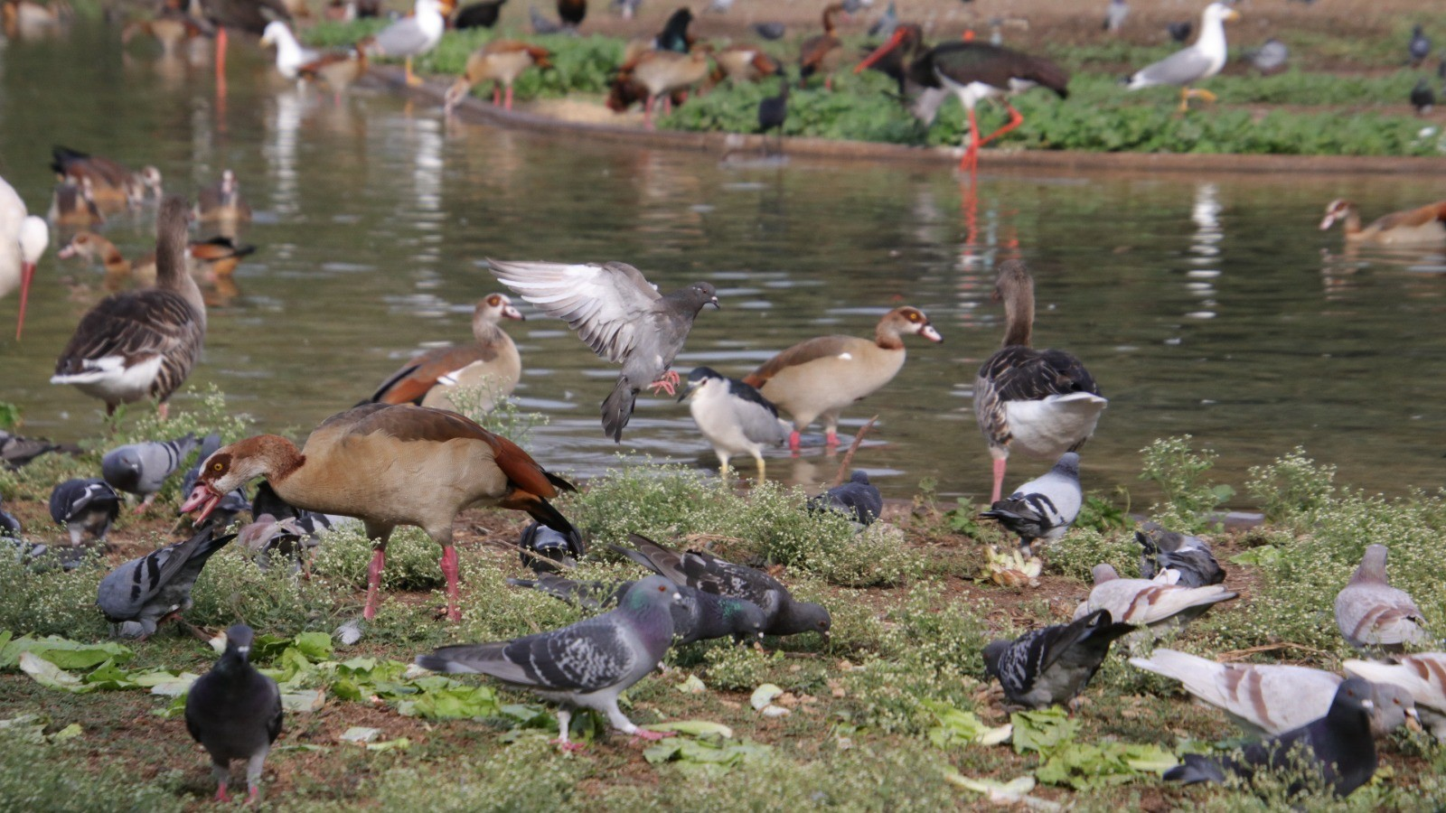 Study: Humans Caused Extinction Of 469 Species Of Birds