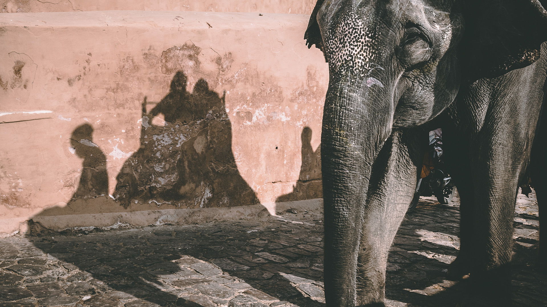 Retire Elephants From Rides At Amer Fort In Jaipur India, Says World Animal Protection