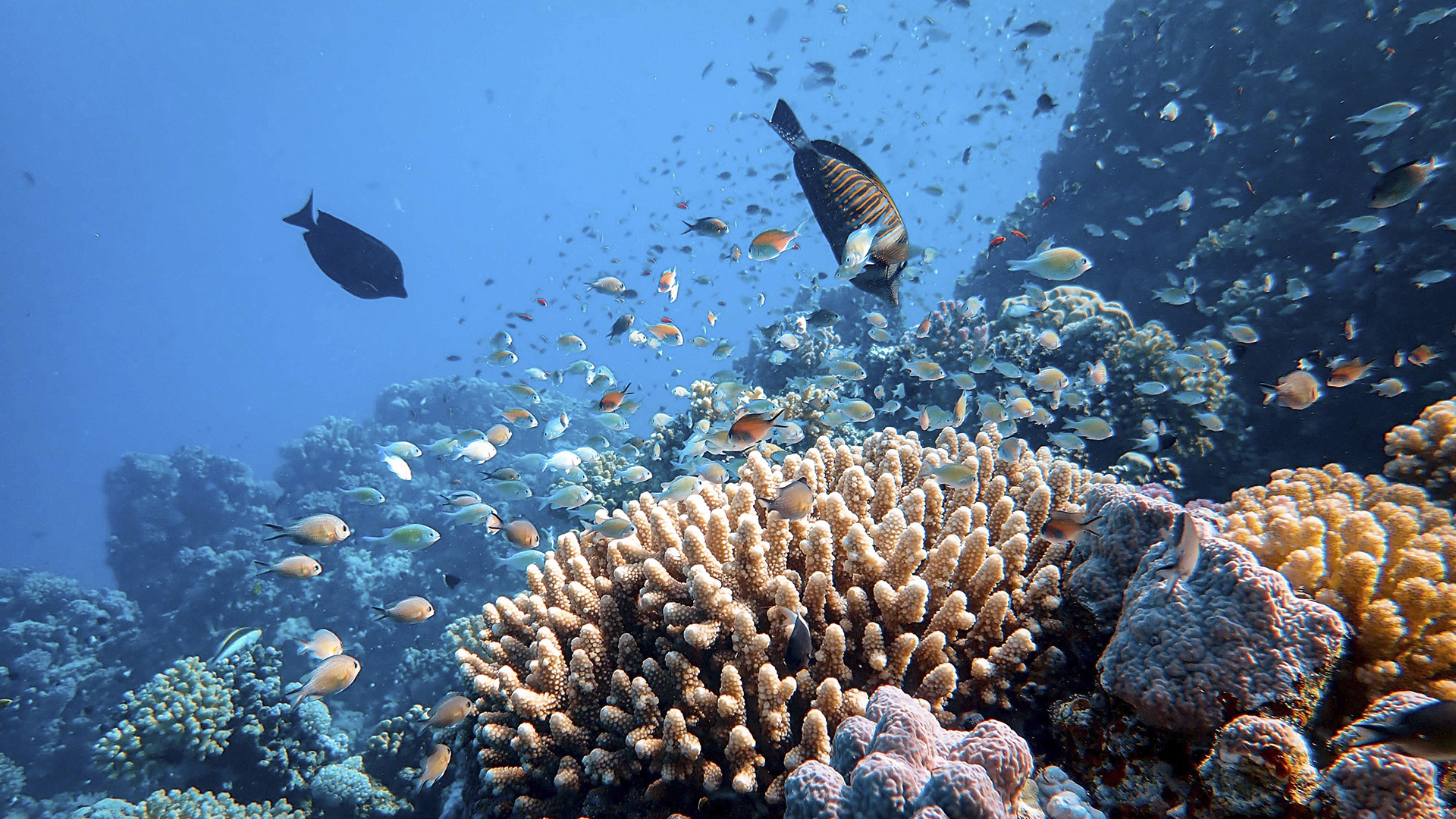 Study Challenges Dogma In Conservation Biology Regarding Coral Reefs