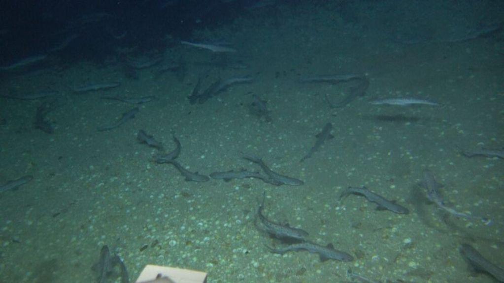 Huge Deep-Sea Shark Hotspot Found Off Coast Of Tel Aviv