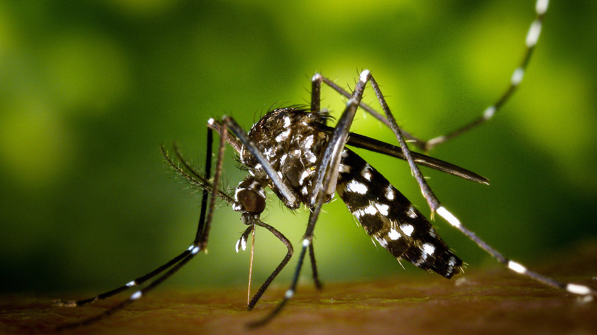 Researchers Determine How Malaria Parasite Defends Itself From Fever