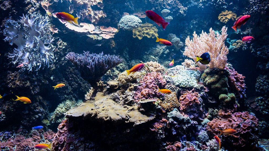 Corals Survive Heat With Bacterial Help: Study