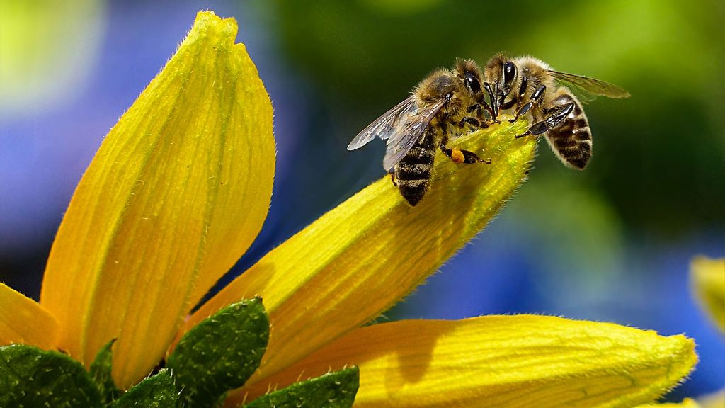 The Bee-Pocalypse: How A Fall In Pollinators Could Wreck World Food Supply