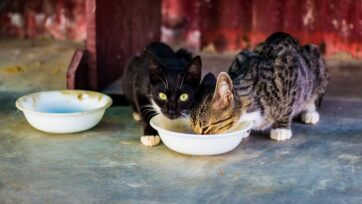 When given the choice between a free meal and performing a task for a meal, cats would prefer the meal that doesn't require much effort. (Bonnie Kittle/Unsplash)