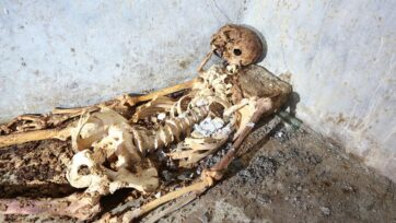 The well-preserved skeleton found in a tomb at Pompeii has been identified as that of Marcus Venerius Secundio. The former slave became a priest and introduced Greek language during public performances in the ancient Italian city, archaeologists said. (Parco Archeologico di Pompei/Zenger)