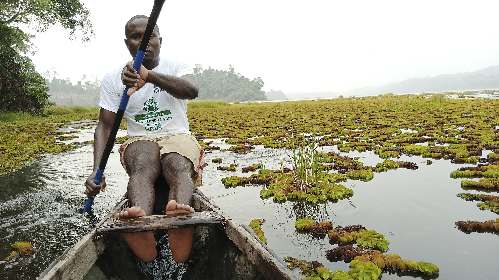 Beetles To The Battle: Scientists Deploy An Army Of Tiny Insects To Restore Cameroon's Dying Lake
