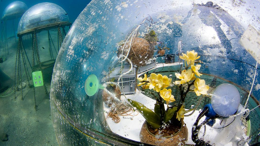 VIDEO: Wave Goodbye To Fields: Futuristic Farm Grows Crops Under The Ocean