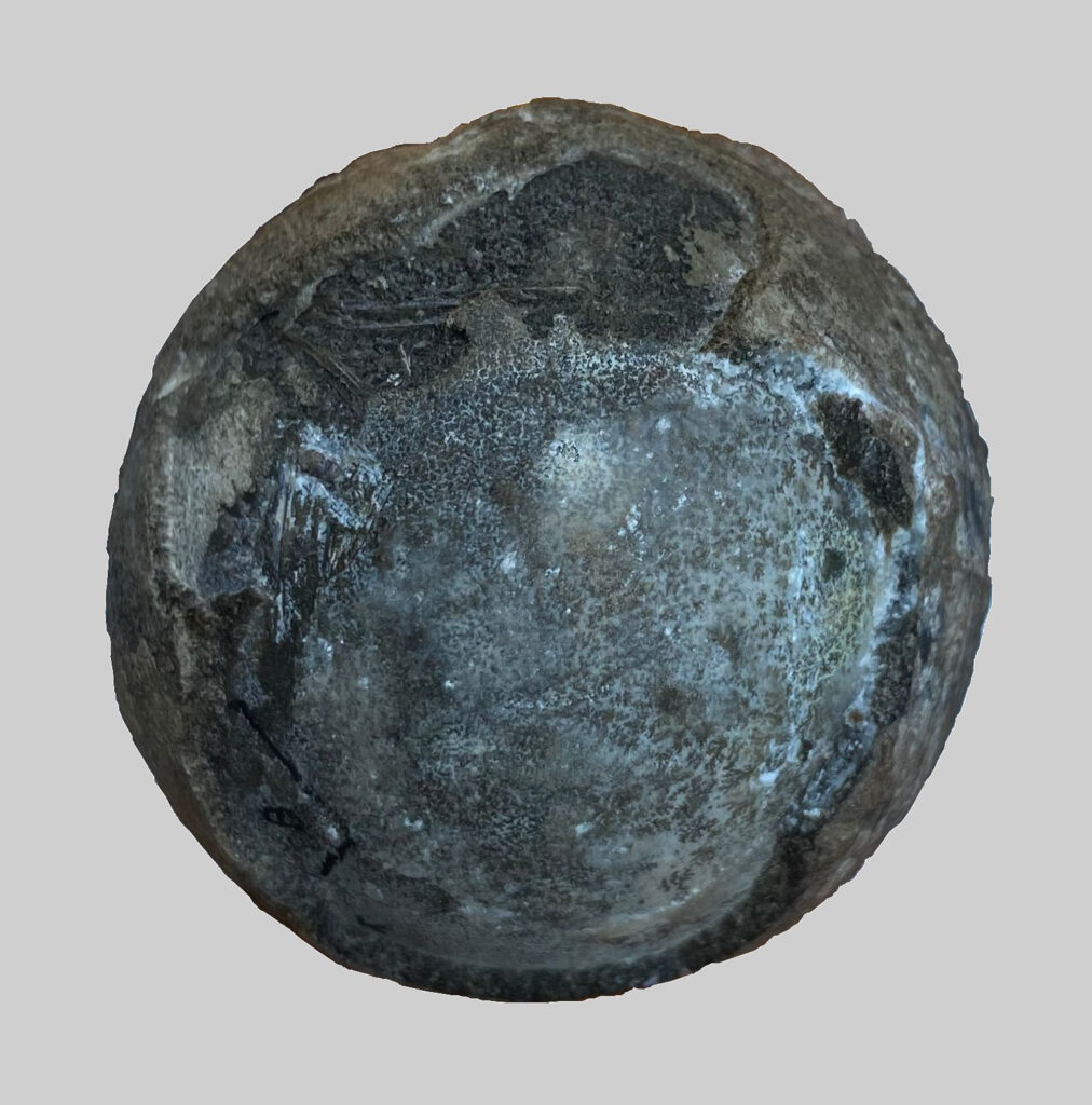This tennis-ball-sized fossilized turtle egg, containing an almost fully developed embryo, was unearthed in east-central China. (Yuzheng Ke/Zenger)