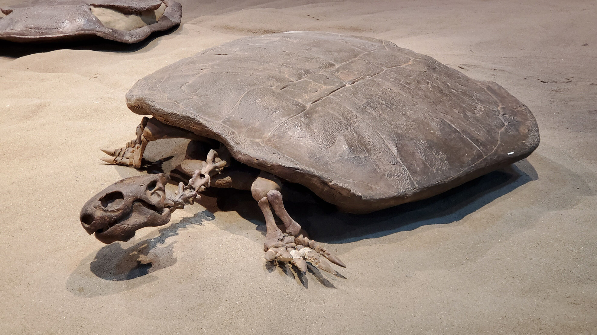 Hell's Shells: 90 Million-Year-Old Egg From Turtle Bigger Than Humans
