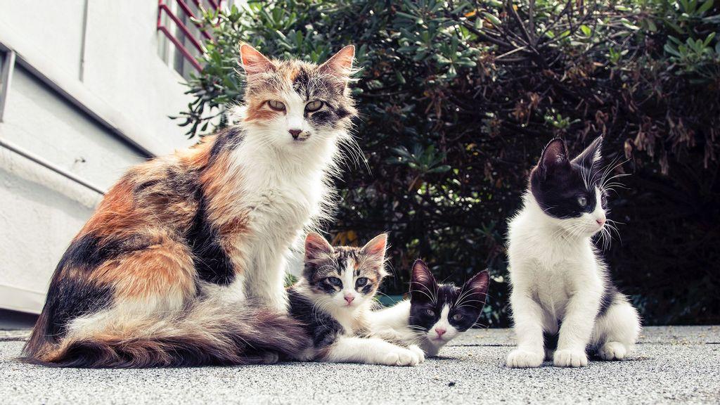 "Indian Man Opens ""Cat Garden"", Raises Over 200 Cats"