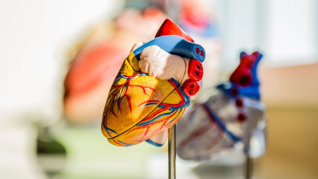 Heart Receives SOS From Fat Cells, Builds Defense Against Obesity Eventualities: Study