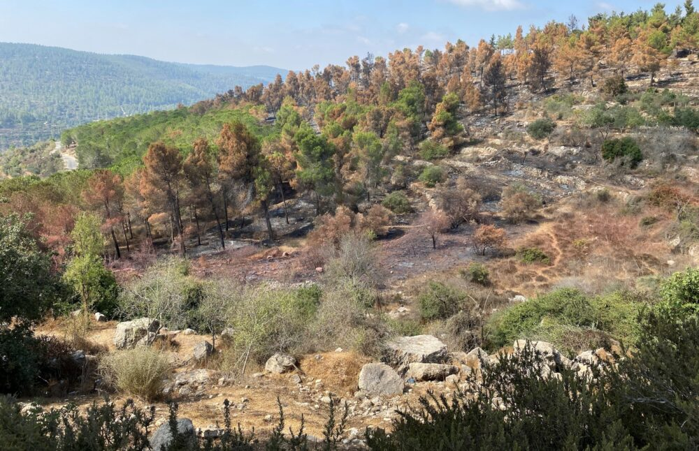 Hoping For Regeneration In Israel's Burned Out Forest