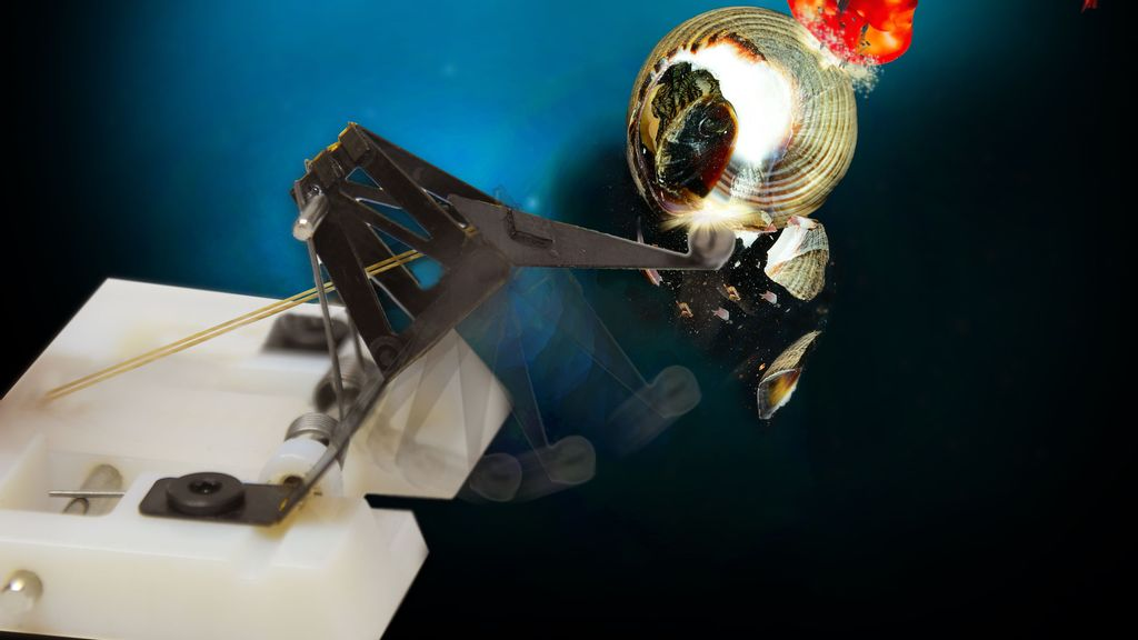 VIDEO: Tiny Robot Packs As Fast A Punch As The Powerful Mantis Shrimp