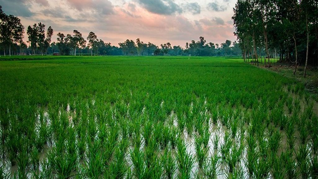 <p>A lush green wetlands area with a striking sky in northeast Bangladesh. (@tafsirahmedphoto/Zenger News)</p>