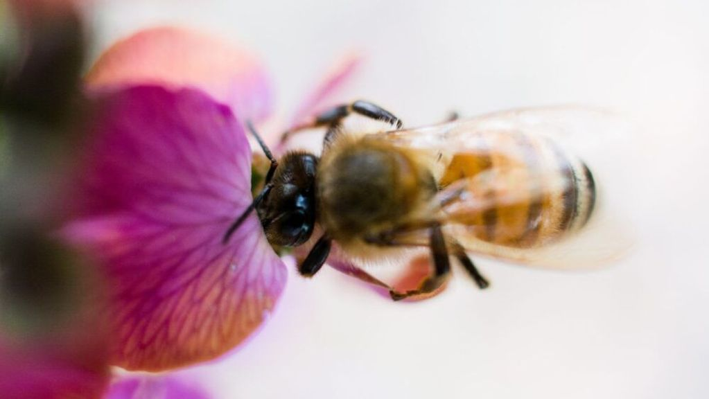 How The Start-Up Nation Is Trying To Save The Bees