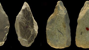 Sharpened bone tools excavated at Castel di Guido. (Villa et al 2021 Courtesy of PLOS ONE)