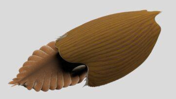 View of Titanokorys gainesi reconstruction. (Illustration by Lars Fields, Royal Ontario Museum)