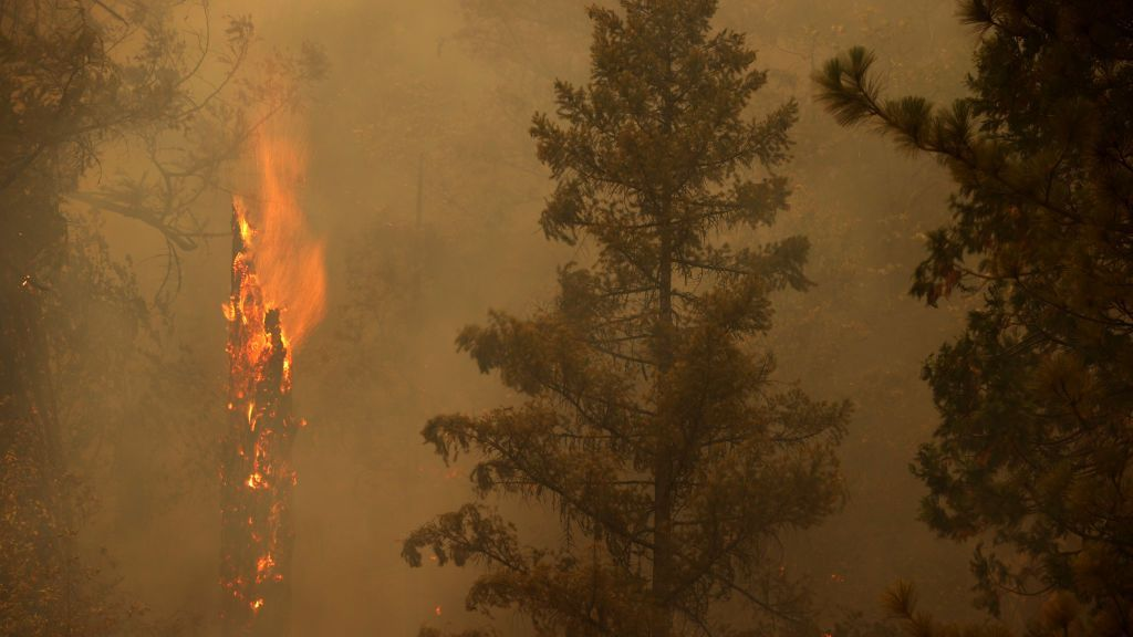 Study Links Wildfires To Thousands Of Respiratory And Cardiovascular Deaths Annually