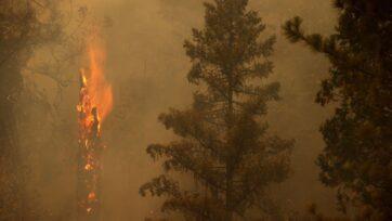strongUn árbol se quema mientras el incendio Dixie se expande en el área el 26 de julio de 2021, cerca de Quincy, California. El incendio Dixie, el cual inició el 14 de julio, y todavía está activo, hasta ahora ha quemado más de 370 mil hectáreas y ha destruido más de mil edificaciones, según Cal Fire. (Justin Sullivan/Getty Images)/strong