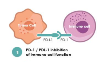 Cancer cells often use the nectin pathway to avoid the PD-1 pathway to disable immune cells. A new treatment, used alone or in conjunction with PD-1 inhibitors, could be a strong contender in the quest to boost the success of immunotherapy for cancer patients.(Courtesy of Nectin Therapeutics)