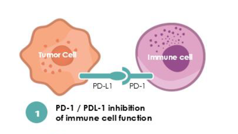 New Drug Candidate Could Boost Potential Of Immunotherapy