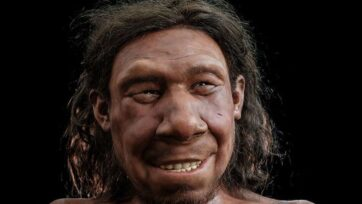 The reconstructed face of Neanderthal named Krijn as interpreted by palaeo-artists, It is on display in the National Museum of Antiquities in Leiden, Netherlands, through next month. (Rijksmuseum van Oudheden, Netherlands/Zenger)