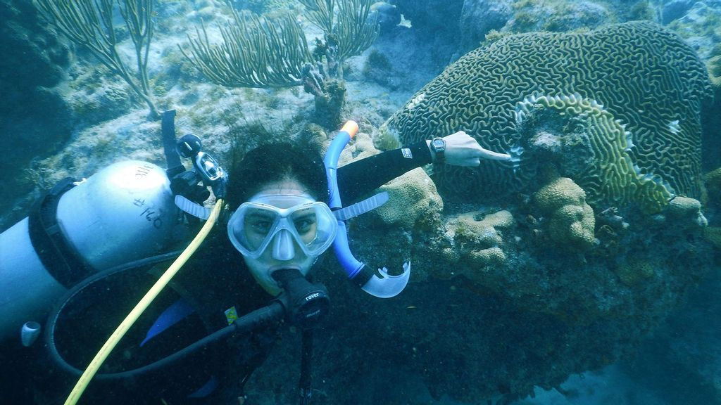 VIDEO: 'Noah's Ark' For Coral Promises To Save Endangered Florida Reef
