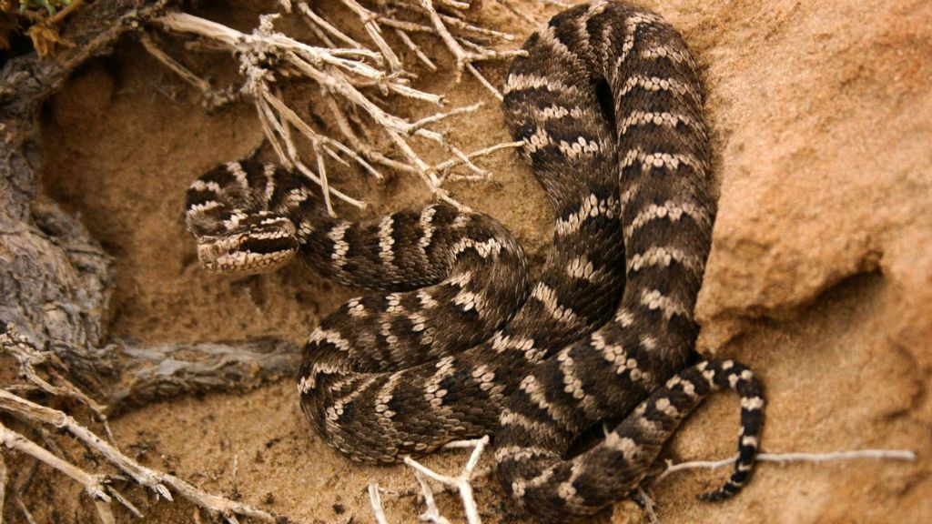 Study: Modern Snakes Are All Descended from a Handful that Survived Dinosaur Extinction