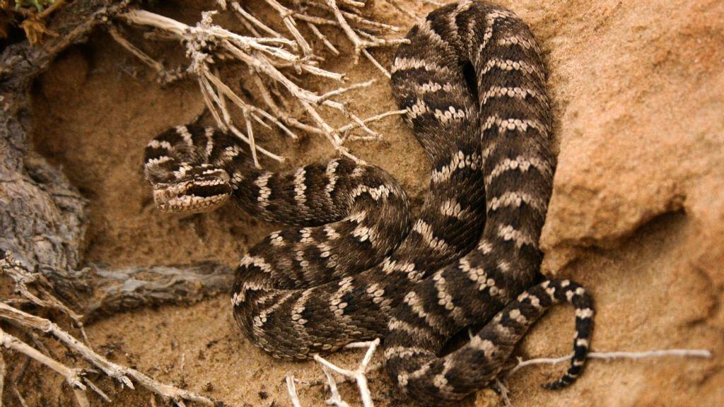 Todas las serpientes modernas deben su existencia a sus antepasados que sobrevivieron la extinción de los dinosaurios