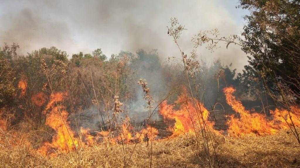 Amazonia no es el único bosque en llamas en Brasil