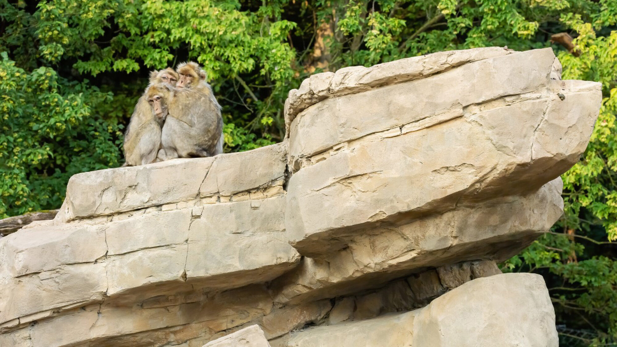 VIDEO: World's Oldest Zoo Spends $1.5 Million On Home For Monkeys And Sheep