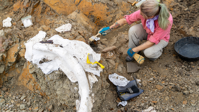 Paleontologists Discover Four Dinosaurs In Montana's Hell Creek Formation