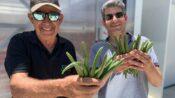 Israeli-Grown Vanilla Aims To Disrupt The Industry
