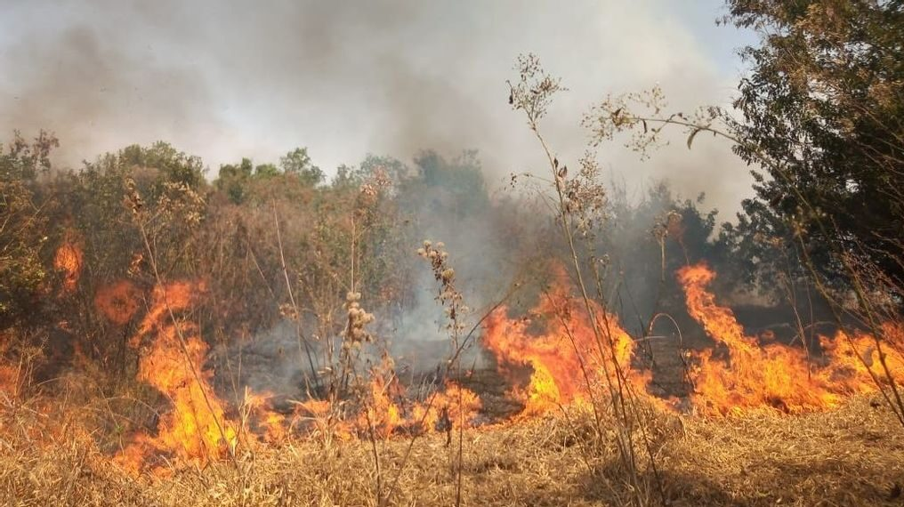 The Atlantic Forest, One Of The Richest In Global Biodiversity, Is Plagued By Wildfires