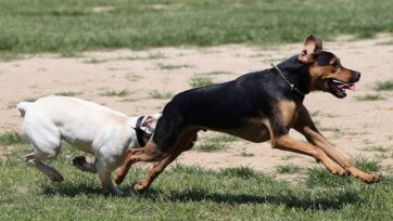 Researchers say dog parks can be risky for your pet now that hookworms have become resistant to common deworming drugs. (Bruce Bennett/Getty Images)