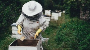 Beekeepers have long sought a natural way to protect bees from the virus spread by mites. (Annie Spratt/Unsplash)