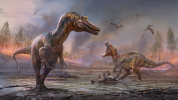 An artist's impression of spinosaurids of the Cretaceous Era — Ceratosuchops inferiodios (left) and Riparovenator milnerae. Researchers are studying the fossilized remains of two spinosaurids found on the Isle of Wright. (Anthony Hutchings)