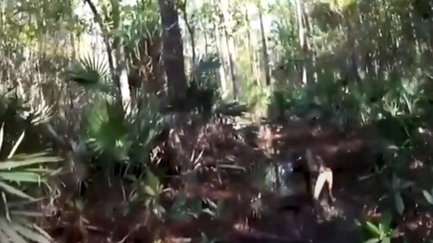 VÍDEO: Policía y su fiel canino rastrean a sospechoso a través de zonas pantanosas
